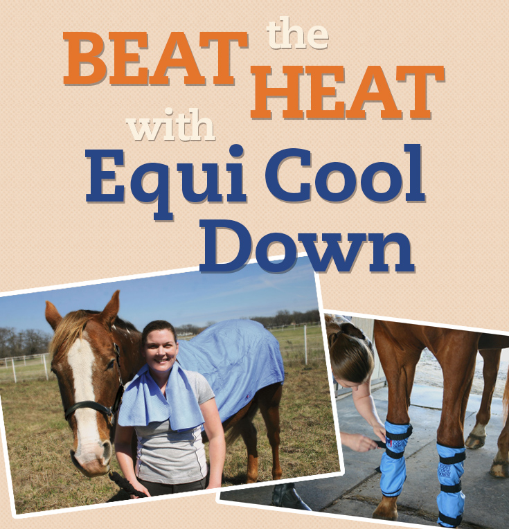 Beat The Heat with Equi Cool Down - review from seehorsedesign.com